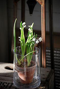 lovely, terra cotta w/in glass vase....