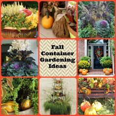 Fall Container Planting Ideas   Dorothy Sue and Millie B's too: Fall Container Gardening Inspiration