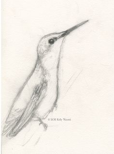 Hummingbird Drawings | Drawing and painting hummingbirds...while they are still here!