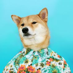 MWD Trendspotting: Vintage Hawaiian Floral Prints Floral Short-Sleeve Button-Down: Reason Clothing not shown: Twill Trousers: J.Crew | Sneakers: Nike Blazer Mid 77 | Watch: Automatic Max Bill Watch (MoMA store)