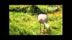 Gólyák vándorlása - dokumentumfilm Film, Youtube, Spring, Creative, Movie, Film Stock, Cinema, Films, Youtubers