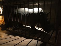 Arcade, Port Elizabeth, Spain, Horses, Animals, Santiago De Compostela, Animales, Animaux, Sevilla Spain