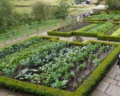 What to think about when it comes to your own vegetable garden