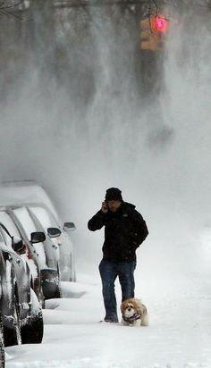 Snowy NYC Shih Tzu braves the elements.