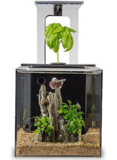 rogeriodemetrio.com: EcoQube C Wireless Remote Aquarium