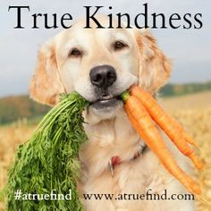 #atruefind is about kindness, compassion, and fun! www.atruefind.com