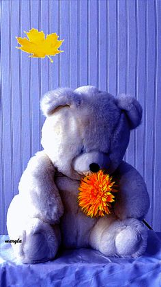 Teddy and flower