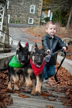 34 German Shepherd Puppy Pictures That Will Make Your Heart Melt | GsdTube