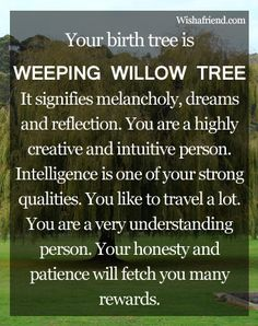 Your Birth Tree: Weeping Willow Tree....I ust found this out......How WEIRD