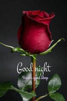 Good Night Images Wallpapers for Whatsapp Good Night Cards, Good Night Qoutes, Good Night Thoughts, Good Night I Love You, Romantic Good Night, Good Night Sleep Tight, Good Night Friends, Good Night Greetings, Good Night Messages