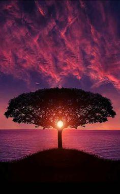 Purple sky, sunset, tree, background