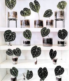 Tag a Friend to share some inspiration us olivra.houseplants us olivra.houseplants by sogreenmx Planting Succulents, Potted Plants, Garden Plants, Indoor Plants, Planting Flowers, House Plants Decor, Plant Decor, Plant Aesthetic, Cactus Y Suculentas