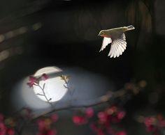 #835 小綠幽穿 | Flickr - Photo Sharing!