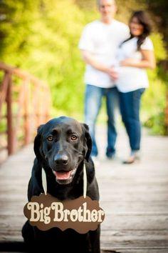 Maternity shot with dog