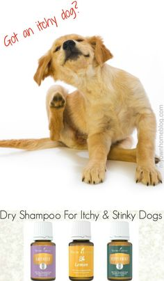 Dry Shampoo For Itchy & Stinky Dogs