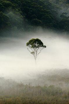 Fog from David Murphy. Love this