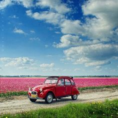 Let the spring embrace you! Here are 50 majestic spring photography examples to set up your mood! Spring Photography, Stunning Photography, Citroen Ds, Auto Volkswagen, Psa Peugeot, 2cv6, Cute Cars, Jolie Photo, Vintage Cars