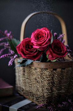 Love Rose Flower, Beautiful Rose Flowers, Beautiful Flower Arrangements, Floral Arrangements, Book Flowers, Flowers Nature, Flower Wallpaper, Flower Backgrounds, Aesthetic Roses