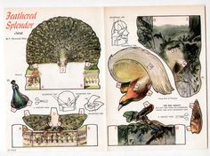 Vintage PEACOCK/BIRD OF PARADISE 3-DIMENSIONAL Cut-Outs page 1968 uncut #PaperDolls