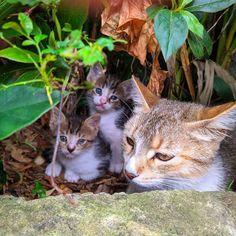 🐈🥰 #cats #babycats #love #mumcat #brothercats Instagram Number, Instagram Posts, Baby Cats, Animals, Animales, Small Kittens, Animaux, Kitten, Kitty Cats