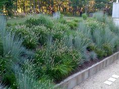schizachyrium scoparium and pennisetum