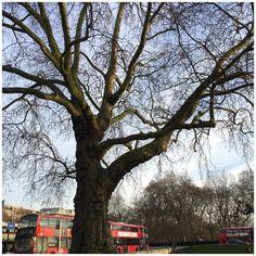 Fredag i vinterferien tog vi på en forlænget weekend til London. Det har været nogle dage fyldt med dejlige oplevelser og med dejligt forårsvejr.