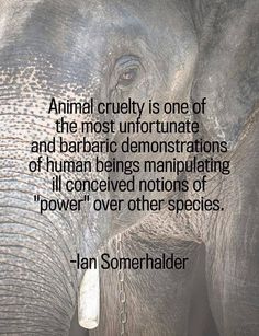 """""""Animal cruelty is one of the most unfortunate and barbaric demonstrations of human beings manipulating ill conceived notions of 'power' over other species"""" - Ian Somerhalder"""