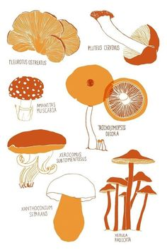 Edible or not this cheery collection of mushrooms will liven up any wall. You will receive a print of an original illustration done in ink Mushroom Crafts, Mushroom Art, Mushroom Fungi, Mushroom Drawing, Mushroom Hunting, Growing Mushrooms, Wild Mushrooms, Stuffed Mushrooms, Edible Mushrooms