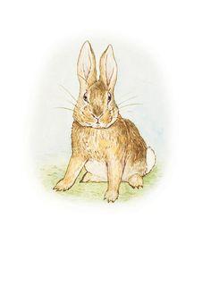 The Story of a Fierce Bad Rabbit Next tattoo.