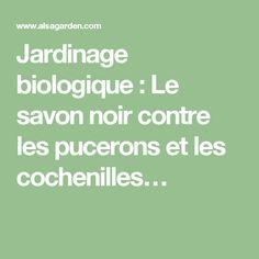 Jardinage biologique : Le savon noir contre les pucerons et les cochenilles…