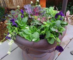 Pansies are one of my favorite annuals and I like the idea of mixing in a few ornamental cabbage.