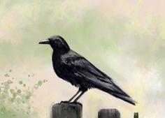 Drawing: crow