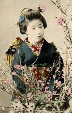 "okiya: "" Maiko Yachiyo with branches of Plum Blossom ""Yachiyo was a famous Geiko (Geisha) from Osaka, considered one of only three Meigi (talented or beautiful geisha) of the Meiji period She became a Maiko (Apprentice Geisha). Japanese Geisha, Japanese Beauty, Vintage Japanese, Japanese Art, Japanese Kimono, Japanese Photography, Old Photography, Image Japon, Era Meiji"