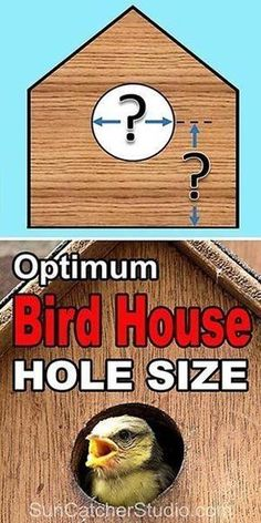 Best dimensions for the entrance hole size for a bird house or nestbox. Learn the optimum ENTRANCE HOLE SIZE, entrance height, and mounting height for various birds. Homemade Bird Houses, Bird Houses Diy, Building Bird Houses, House Building, Bird House Plans, Bird House Kits, Bird House Feeder, Bird Feeders, Squirrel Feeder