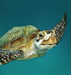 "contemporary sea animal PAINTING | Sea Turtle"" Drawing art prints and posters by Michelle Kondrich ..."