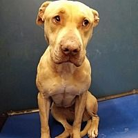 Pin On Help Save The Dogs Please 2nd Pg