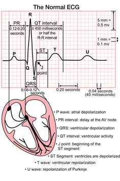 The Normal ECG - iFastFacts