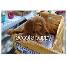 #bucketlist adopt a puppy