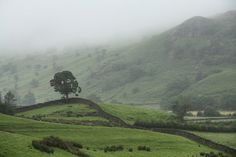 Lone tree, Hartrigg, Kentmere, Lake District National Park, Cumbria, UK