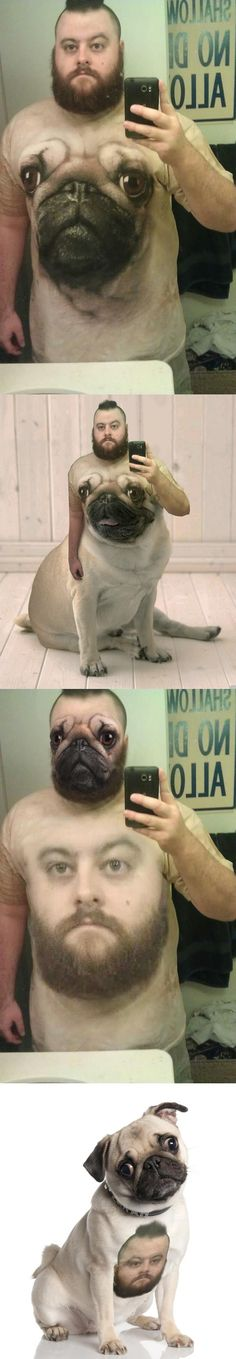 I don't even have a pug. But I did laugh at this for 3 minutes.