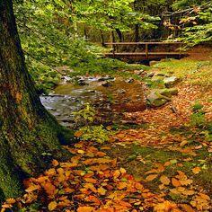 www.joseluisavilaherrera.BLOGSPOT.com-bosque-y-rio.jpg (595×595)