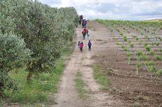 Entre Viñedos y Olivares - IV Primavera Enogastronómica 2016 - Ruta del Vino Ribera del Guadiana - Ruta senderista por Palacio Quemado