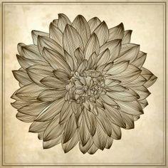 dahlia tattoo designs | INSPIRATION: Dahlia