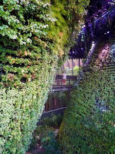 "WOHA creates ""oasis in the desert"" for Singapore Pavilion at Dubai Expo."