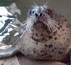 seaside oregon - Google Search Seaside Oregon, Places To Visit, Google Search, Animals, Animales, Animaux, Animal, Animais