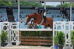Maggie Jayne on The Answer at Devon in the Hunter Derby   The Chronicle of the Horse