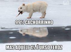 Esse pequeno cão, que mais parece um filhote de urso polar, foi clicado no momento que roubava peixe de um pescador em um lago em Cimiseni, na Moldávia. Não é uma fofura?  Veja essa e outras imagens do dia aqui ==> http://glo.bo/1QLQlsD #G1