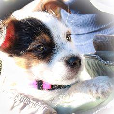Artù #lovelydog #bestdog #5fotoxunpasto16 #instadogofficial #insta_dogs #liondog #instadogmagazine #ilovemydog #ilovemydogs  #DogLove #amiciaquattrozampe #cucciolo #cane #artu' #la_animals #la_dog #canoneosm3