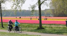 Tulip Tours - Boat Bike Tours