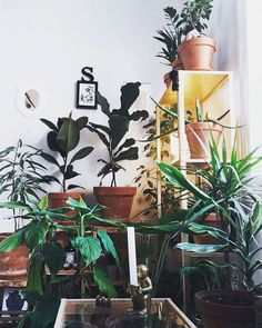 "103 Likes, 2 Comments - monkey (@o_spiros) on Instagram: ""my room - photo by: @bediff   #indoorjungle #indoorplants #green #white #light"""
